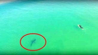 Here's Drone Footage Of A 10-Foot Shark Swimming Terrifyingly Close To Surfers