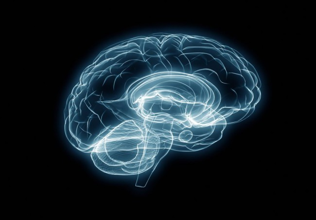 Ohio State University Researchers Have Grown A Brain In A Lab