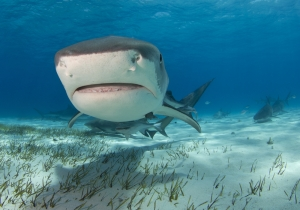 This Massive 18-Foot Shark Will Ensure You Never Go In The Water Again