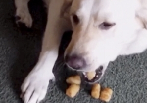 This Tater Tot-Barfing Dog Is The Vine You Need To See Today