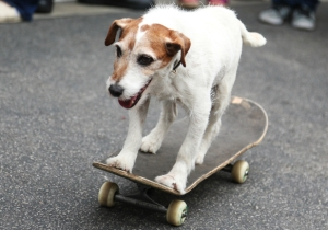 Uggie The Dog From 'The Artist' Has Been Put To Sleep At 13 Years Old