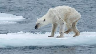 Photos Of Dying Polar Bears Have People Talking About Climate Change