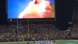 The 'Dramatic Chipmunk' Is Helping Minnesota Distract Opposing Kickers