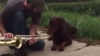 Important Breaking News: This Dog Pretends To Play The Saxophone
