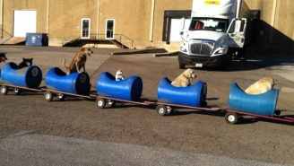 An 80-Year-Old Texas Man Built A Train To Take Rescue Dogs On Adventures