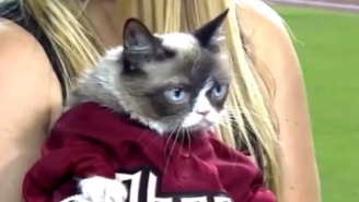 Grumpy Cat Threw Out The First Pitch At A Diamondbacks Game, Still Left Grumpy