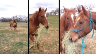 Helpful Horse Brings Snacks To His Girlfriend
