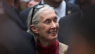 Primatologist Jane Goodall: Cecil The Lion's Killer Must Have 'A Very Small Penis'