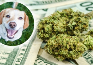 A Package Of Marijuana Worth $10,000 Fell From The Sky And Took Out A Family's Doghouse