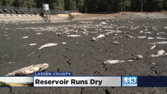 How Did This California Lake Disappear Overnight, Leaving Thousands Of Fish Dead?