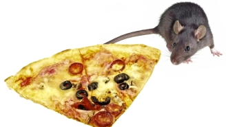 Pizza Rat Takes Slice 'To Go' In Most Adorable Video Of Vermin And Trash Food Ever