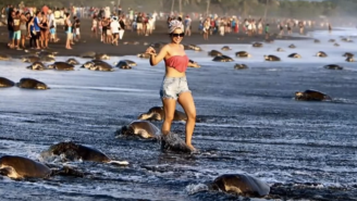Turtles Are Dying Because People Keep Taking Selfies With Them