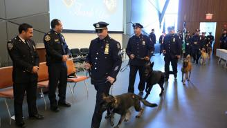 The NYPD Added 17 New K9 Cops To Its Ranks And They're All Awesome