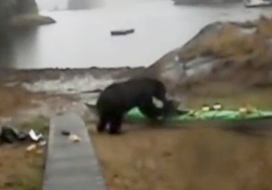 This Lady's Insane Meltdown When A Bear Eats Her Kayak Is Probably The Funniest Bear Attack You'll Ever See