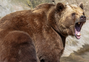 This Man Saved Himself From Being Eaten By A Bear By Jamming His Arm Down Its Throat
