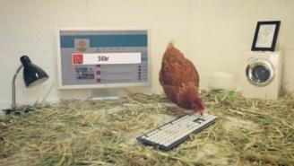 Meet Betty, The Chicken Who Is Running An Australian Restaurant's Twitter Feed