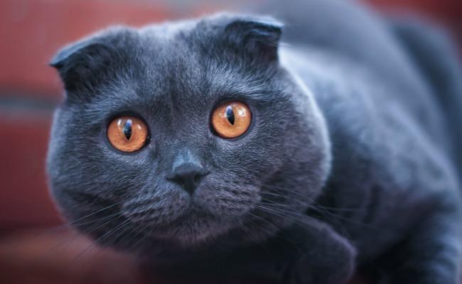 creepy-cat