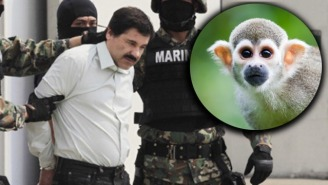 El Chapo's Latest Brush With Capture Had Everything To Do With A Pet Monkey