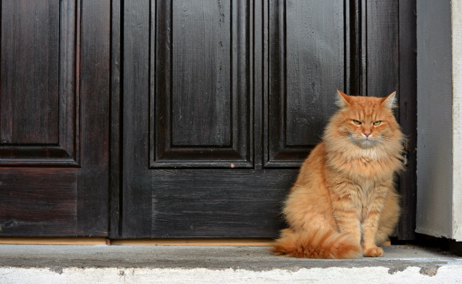 Surprise! Science Says Your Cat Wants To Kill You