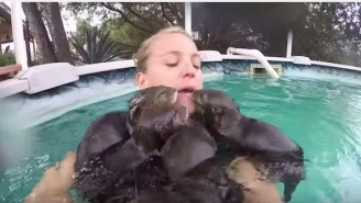Have You Seen This Horrific Video Of An Innocent Woman Being Swarmed By Vicious Baby Otters?