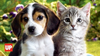 Revisiting The Scientific Proof That Dogs And Cats Are Capable Of Love