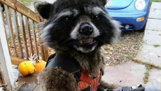 This Cool Mom Made Her Son An Uncanny Rocket Raccoon Costume For Halloween