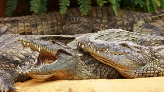 Indonesia Is Planning To Use Crocodiles As Prison Guards For The Most Practical Of Reasons
