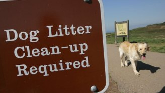 Condo Owners Vow To Crack Down On Lazy Dog Owners With Doo Doo DNA Tests