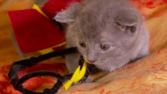 Kittens And 'Harry Potter' Combine In The Cutest Video You'll Watch All Day
