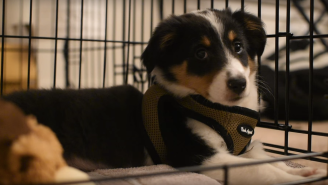A Puppy Hearing The Guitar For The First Time Is Your Moment Of Zen