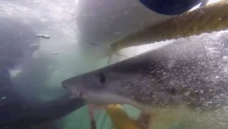 This Close Call With A Great White Shark Will Make You Think Twice About Going Back In The Water