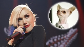Gwen Stefani's Fashion Empire Will Now Extend Into The Canine Fedora Realm