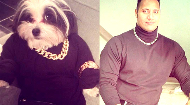 The Rock Shares Some Photos Of People Dressed As Him On