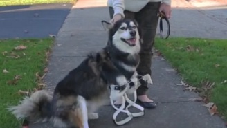Look At How Happy This Dog Is With His Upgraded 3D-Printed Legs