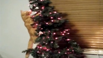 These Cats Wreaking Unholy Terror On Unsuspecting Christmas Trees Are Living Their Best Lives