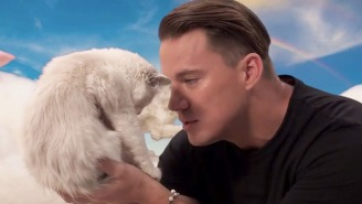 Watch Channing Tatum Say Hateful Things To A Kitten: 'You Smell Like Garbage And Fish, Bro'