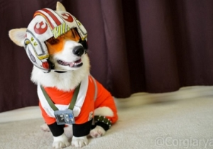 The Cutest Member Of The Rebellion Flies In With The Funny And Awesome Cosplay Of The Week