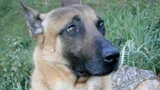 The Heroic Dog Killed In The Paris Terrorist Raid Will Be Posthumously Honored For Her Bravery