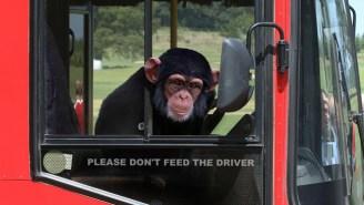 A Monkey Stole A Bus!