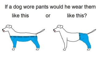 The Internet Is Losing Its Mind Over This Debate On How A Dog Would Wear Pants