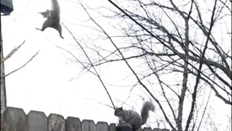 Enjoy This Video Of A Squirrel Forgetting How To Squirrel