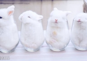 This Week In Cute: Corgis, Piglets, And Bunnies, Oh My!