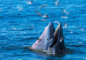 These Whales Have Lived Longer Than 'Moby Dick'