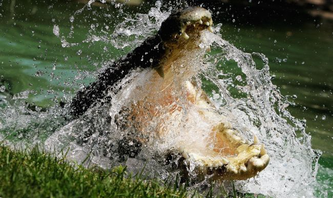 Australia's Deadliest Animals