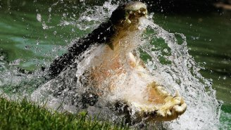 Scientists Just Discovered The World's Largest Crocodile… Ever
