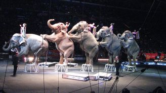 The Ringling Bros. Elephants' Early Retirement Plans May Spark Some Human Envy