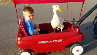 This Little Boy And His Pet Duck Have An Incredible Bond Like Nothing You've Ever Seen