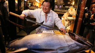 Cool It With The Sushi, The Bluefin Tuna Population Is Down 97 Percent