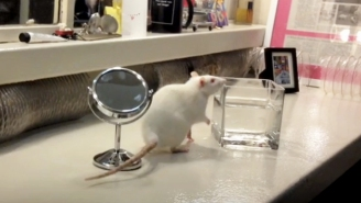 This Talented New York City Rat Tragically Died In A Freak Accident Right After Her Broadway Debut