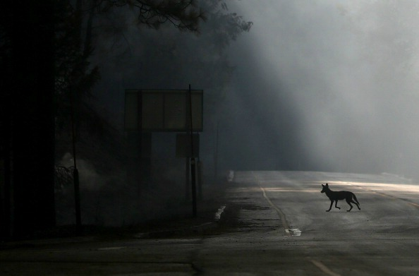 coyote road
